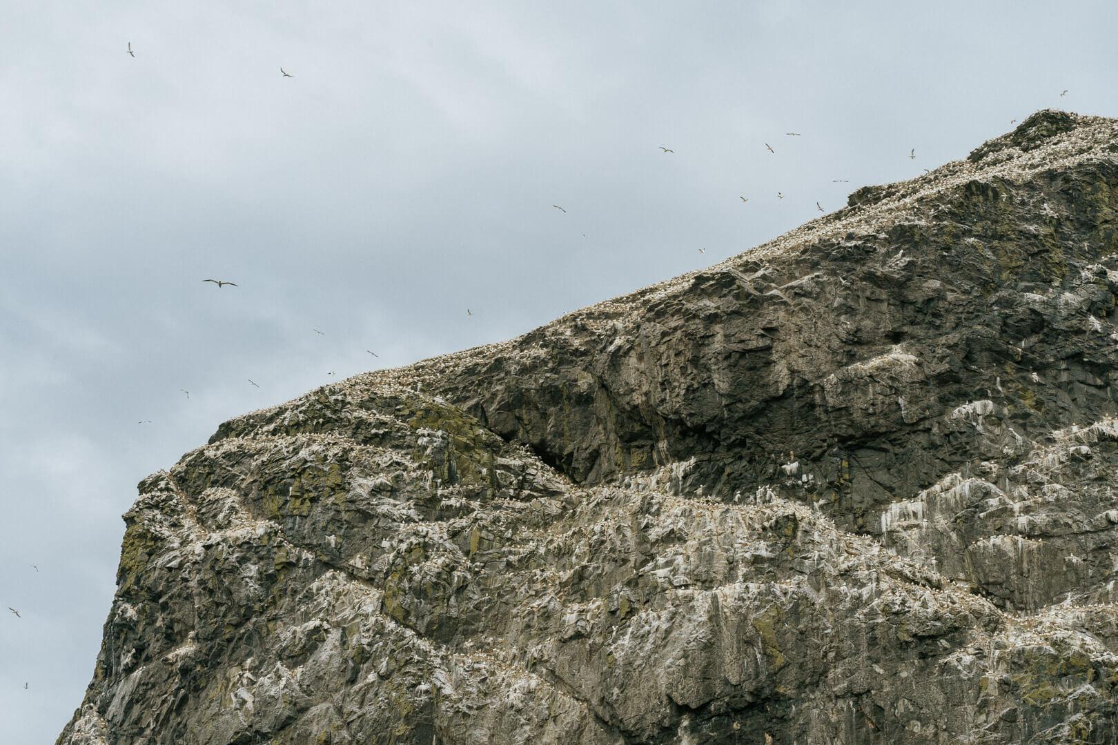 Bird Colonies at St kilda